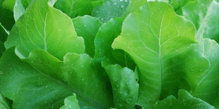 Московский парниковый салат